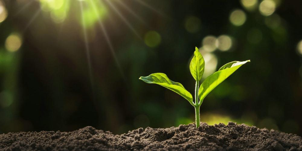 全新非靶向植物代谢组学产品