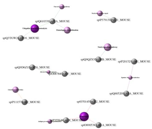 科服官网更新-鉴定类和修饰类 9